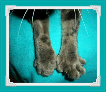 FLANAGAN FEET!!  Sasha the Siamese  kitten comes tomorrow...errr today!!  19/97/04  HAPPY FOURTH OF JULY!!!!!!!!  all my American Smuggers!!!!