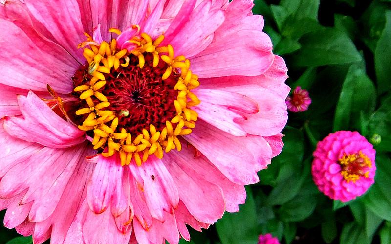 17/07/16   pinks