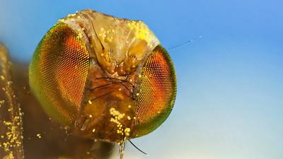 BEE 'S EYES  by Bruno SUIGNARD