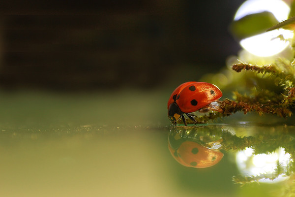 Ladybird  - 8