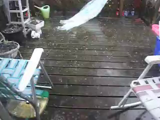 WE NEVER GET HAIL STORMS ,,,IN THe SUMMER,, HERE IS ONE BEFORE WE MOVED,,, I GOT THE SOUND OF THUNDER IN AT THE END ,,, SORRY  IF IT'S A BIT LONG ,,, I MISS OUR OLD BACK YARD..POST FOR JULY 8/17