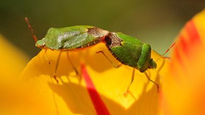 Bugs  by Bruno Suignard