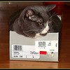 """Don't call meeee  fat.""<br />   Aug.12/12 post<br />   Got some things at a yard sale and the lady put them in this shoe box. The moment the tissue was unfolded with the box on the floor , my kitty got into it. She is sitting in the middle of the floor so we are having to walk around her ,but the look we get when we approach is, ""no joke."" She will not be disturbed!  She is getting a little chunky but eats her sister's food during her cat naps .<br />   Have you ever stopped at a yard sale and thought WOW , I think that is fine China from Windsor castle ! Well , you know what I mean.<br />  We got this shoe box full of lovely little things and we thought woohoo , "" just like pirates with the treasure chest"". <br />  Got home and e bay has the stuff on sale for 35 dollars US. Thought we had a teapot fit for Royalty ,or as Mrs. Bouquet would say "" Oooh I'll serve it on my Royal Dolton!""!   Oh well, It's pretty vintage china and looks nice on the shelf."