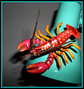 HELP,,,,THERE'S A LOBSTER IN THE HOUSE.  GOING UP TO - 7 IN THE MORNING. I MIGHT GET OUTSIDE,,,,, 2/2/19