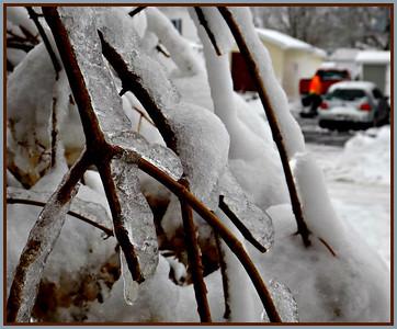 CLOSE UP,,,,, ICE BUSH,,,,, MORE SNOW ON MONDAY,,,12/1/18