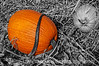 Pumpkins; really needs to be viewed in the largest sizes to see the lovely details.  <br /> <br /> Thanks for the comments on my shot of the building with the golden windows.  Much appreciated.  Hope you day goes well!