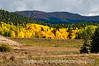 Not far from Divide, Colorado on the road to Cripple Creek in the autumn.  The aspens were as brilliant as I'd ever seen them.  Best viewed in the larger sizes<br /> <br /> Thanks for the comments on my shot of the raindrops on the hollyhock.  Much appreciated.  Sure loved all your shots today!  You guys sure know how to keep me motivated.