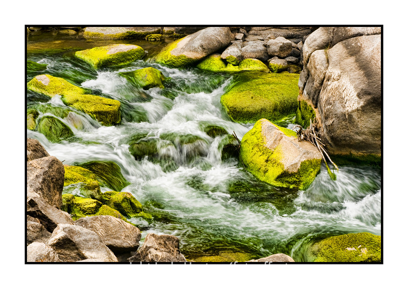 Along the S. Platte River in Eleven Mile Canyon in Colorado.  Along one stretch of the river, the rocks were bright green with algae.  I think the water level had been higher not long before this and the algae reflected the earlier levels.  It did make it look quite spectacular!