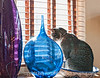 Cat in a bowl; best viewed in the largest sizes.  I liked the light, as well as the fact that the cat was sitting in the bowl.  I also liked the two glass sculptural vases.<br /> <br /> Thanks for your comments on my recent posts.  Much appreciated.