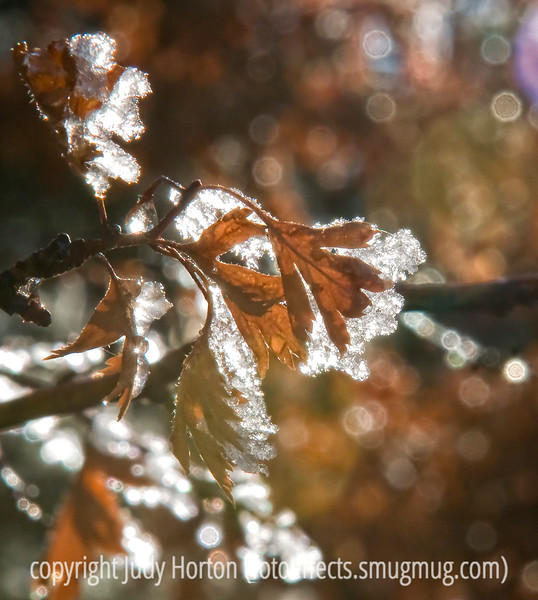 Leaves with hoarfrost backlit by morning sun; best viewed in the largest sizes<br /> <br /> Thanks to everyone who commented on my shot of the white on white hoarfrost.  So glad you don't mind the hoarfrost shots.  It isn't often that Mother Nature provides such a miniature tour de force for me.  Seems like winter brings out the best in many smugmug photographers.  There have surely been a lot of outstanding images on the dailies lately.  It is also interesting to see how everyone evolves and matures in their craft.  I know I've improved my photography since joining the dailies, but so has almost everyone else.  Really amazing how we feed off one another!