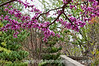 Redbud tree in bloom (cercis canandensis); best viewed in the largest sizes<br /> <br /> Thank you all for your kind remarks on my shot of the red/orange tulips.  It is so great to be able to share one's shots with such a great community.  If not for you, most of my shots would never be seen by another person.<br /> <br /> Hope your weekend is going great!