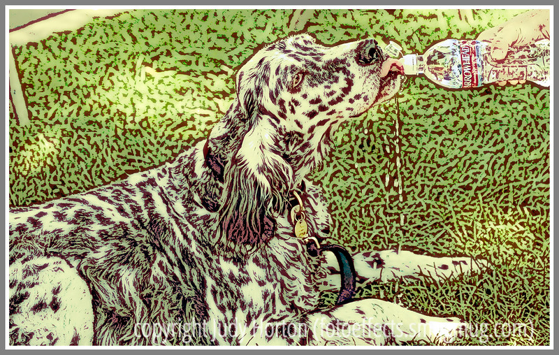 Day 18 - A dog drinks from a bottle of water; this image has been manipulated in Photoshop to make it look like a silkscreen fine art print