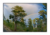 Rainbow - This shot was captured after a storm at my home in the Black Forest area of Colorado Springs.  The shot was taken from my front porch.  We've had quite a few nice rainbows this year, but I think this one was the most distinct and sharp.<br /> <br /> Thanks for all the comments on my bee shot.  Couldn't believe all the fantastic photos on smugmug today.  I get so addicted to looking at them that I have trouble getting anything else done.  I won't be able to post for the next few days, as we're going camping at the Great Sand Dunes, one of our favorite spots in Colorado.  Hopefully, I'll get some nice pics.  It has been raining a lot and I'm hoping it clears up while we are there.  I'm planning to try to take some shots of the stars, which I've never really attempted.  I'll catch up on your shots when I return on Sunday.  Have a great few days!