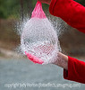 This image shows a the water in a water balloon just after it has been punctured by a pin.  Best viewed in the larger sizes.  This was captured at 1/1000th second shutter speed.  My grandson and I had an entire day of photography.  We started early in the morning photographing red-wing blackbirds, swallows, and ducks at a little retention pond near his home.  Then we shot more birds in his back yard.  Then, we came to my house and punctured balloons, water balloons and played with giant bubbles.  We had a ball!  Spencer is a budding bird photographer and I hope to feature a few of his shots in the next few days.  We are having new carpeting installed in part of our upstairs today.  Lots of fun moving furniture and books to make way for the carpet layers.  Hope you have a fun day, too!  Thanks for all the nice comments on my most recent shot of the peony tulip.