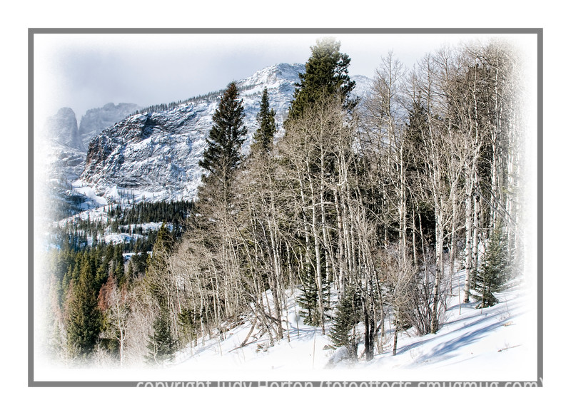 """Day 125 - Rocky Mountain National Park in winter...a grove of aspen and clouds closing in on some mountain peaks; detail in this image is best viewed in a larger size.  I took this shot on our two-day trip to Estes Park and Rocky Mountain National Park last week.  The first day we drove through Rocky Mt. National Park in a snowstorm.  There was almost no visibility and not a lot to shoot.  The next morning, though, was clear, so we drove along the same roads again and were amazed at the incredible mountain peak views all through the park.  However, there were only a few roads open in the park, so in the summer there would be lots more roads to travel and more to see.  On that morning, snow was again predicted and clouds were already starting to move onto the peaks, as you can see here.  They really added interest to the photos, though...at least I think so.<br /> I have a whole gallery of shots from that short trip if you'd like to see more of the park, as well as some shots taken in the town of Estes Park.  We were lucky enough to see both bighorn sheep and elk on the trip and there are shots of those in that gallery.   The link to that gallery is   <a href=""""http://fotoeffects.smugmug.com/gallery/7353323_dWGqD#473291245_9CLzc"""">http://fotoeffects.smugmug.com/gallery/7353323_dWGqD#473291245_9CLzc</a>.  Also, since today is Monday, there is the Monday Challenge and if you'd like to see my entry for the challenge, here is the link:  <a href=""""http://fotoeffects.smugmug.com/gallery/7090659_CBoVw#474497177_4bNGr"""">http://fotoeffects.smugmug.com/gallery/7090659_CBoVw#474497177_4bNGr</a>.  That will also take you to the Challenge gallery where you can see all the other entries.  You will see """"Challenge"""" at the top of the gallery page and if you click on it, you can see all the entries."""