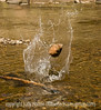 This is a shot of a rock being skipped.  It has hit the water once, resulting in the splash and is on its way to another spot in the stream; view the details of the splash in the larger sizes.<br /> <br /> Hope your day is grand!