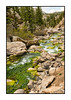 On this stretch of the S. Platte River in Eleven Mile Canyon, Colorado, there is bright green algae growing on the rocks above the waterline, making the scene extremely colorful.  Hope you all had a wonderful weekend.  We certainly had a great time camping at 30 Mile near Creede, CO.  Some of those pics will certainly find their way to the dailies in future days, as I get them processed.  This pic is from our camping trip at Eleven Mile Canyon several weeks ago.  There is some very nice detail to be seen in the larger sizes.