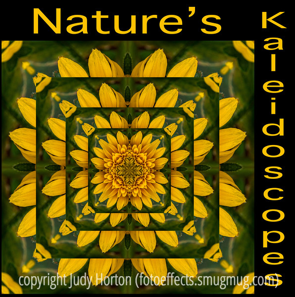 "7/25/14 - A kaleidoscope created from an image of a double gloriosa daisy.  I've been working on a series of these images I've titled ""Nature's Kaleidoscopes"".  Each is created from an image that shows various things in nature.<br /> <br /> Thanks for your comments on my shot of the ultiimate alphabet!  Yep, they really did cost $150 each; they were made of ceramic.  I did not see anyone buying any of them when I was there.  They were designed to be mounted on a wall and one assumes that someone would buy one or a few of them and make a small wall arrangement with them.  Most of the art at the Cherry Creek Art Festival is pretty expensive; these were actually reasonable compared with most of the other art on display.  It is one of the premier art festivals in the country.  It is juried and artists have told me that it is difficult to get in, but it is a show where there is the potential for lots of sales.  The artists come from all over the country."