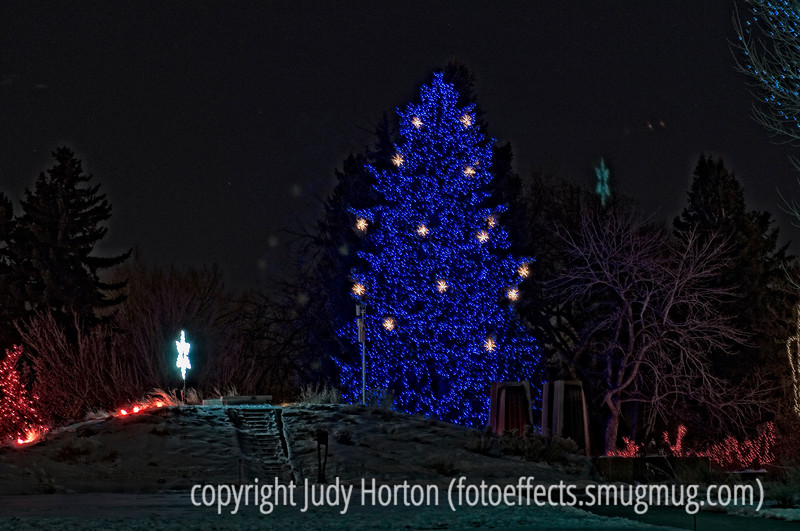 This was taken last year at the Denver Botanic Garden Light Show at the end of December, but, since I did not get the photos processed until after the New Year, I did not use them as my dailies.  Since the season is once again upon us, I thought I might use a few of these shots for my dailies this year.  If you live in the area, this light show is a wonderful one to see.<br /> <br /> Thanks so much for your comments on my shot of the oil refinery.  I'm posting a bit early, as I must rise in the wee hours to go babysit my grandson until time for school, because his dad is having his nasal sinuses roter-rooted and my daughter will be with him.  Hope you enjoy your day!
