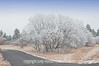 "Hoarfrost covering trees and grasses.  Best viewed in the largest sizes to see the hoarfrost on the tree branches.  This hoarfrost was kind of hit or miss.  Some places it would cover all the trees, grasses, etc.  Other places, it would only be on some trees and not the grasses.  Other places it would be only on one side of the trees.  It is caused by fog which freezes on the branches and plants.  As you can see i the shot, it is till a bit foggy here.<br /> <br /> Thanks for your encouraging comments on my shot of the bar window.  We went to see a production of ""Music Man"" tonight.  It was a lot of fun!  I had seen the movie many times, but I enjoyed the play more.<br /> <br /> Have some fun today!"