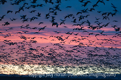 """The morning flyout of snow geese at Bosque del Apache National Wildlife Refuge in NM.  This is actually a tiny proportion of the snow geese that were part of the main flyout.  When that happens, the sky is pretty much covered totally with birds.  There are some shots of that in my """"Birds"""" gallery.  They're not as interesting as photos, but they are pretty interesting in terms of understanding the flyout event.  I was amazed by your response to my shot of the cookware with the reflections.  Some of you wondered where I was, since I didn't show up much in the reflections.  I was off a bit to the side.  Unfortunately, that nice cookware is not mine.  I took the shot at Williams Sonoma.  Hope your week started well and that you have a great day!"""