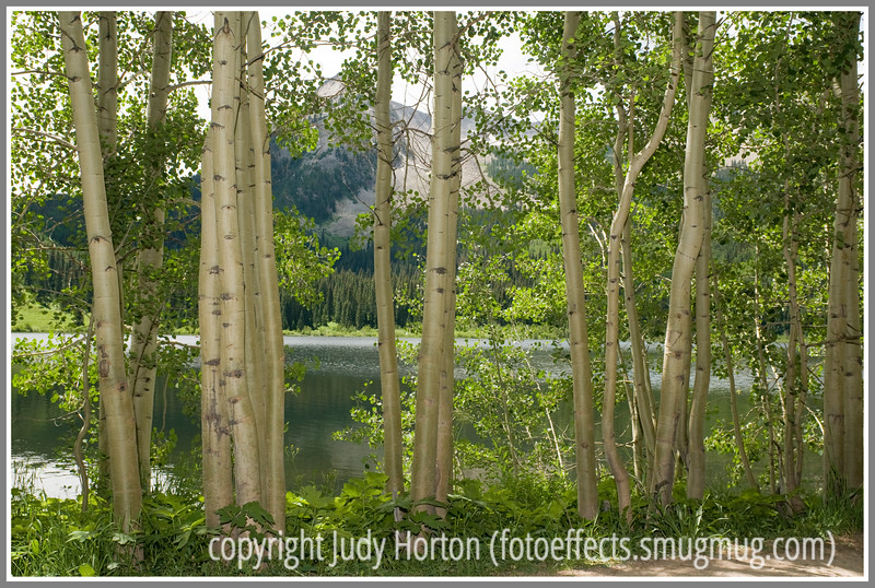 Aspen at Lost Lake, Colorado