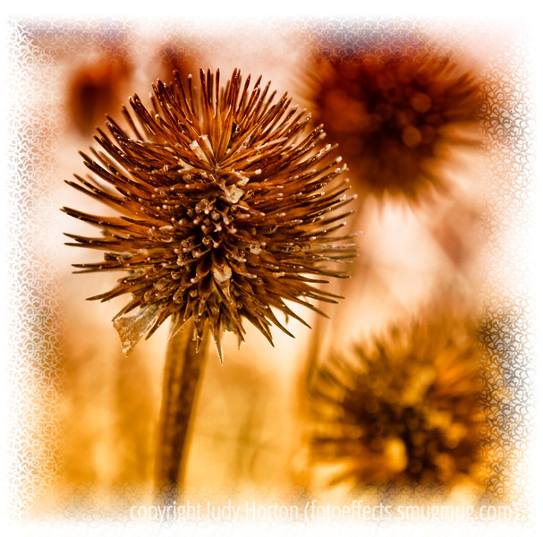 Day 135 - The seedhead of echinacea, purple cone flower; the detail really only shows up in the larger sizes.  I shot this yesterday afternoon while my grandson and I were each looking for interesting things to shoot in our garden.  I really was only trying to keep Spencer company, so was pleasantly surprised when I got several pretty decent shots.  I kind of liked this one...hope you do, too.  It is after midnight here; I'm posting this and then going to bed.  I look forward to seeing all your shots...there were lots of great ones today!