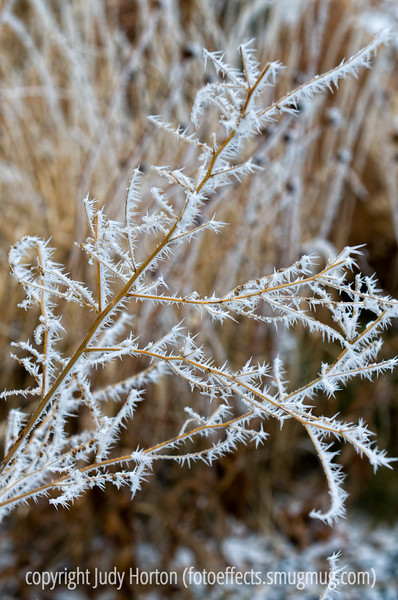 Hoarfrost on a weed; best viewed in the largest sizes<br /> <br /> Merry Christmas morning to all you smugmuggers!  I hope you all enjoy your day!