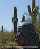 A sculpture by Allan Houser at the Desert Botanical Garden in Arizona; best viewed in the largest sizes.  I thought this wonderful sculpture benefited from its placement in the Sonoran desert part of the garden.<br /> <br /> Thanks to those of you who commented on my shot of the rainbow in the Grand Canyon.  Hope you enjoyed your weekend and are ready for the week.