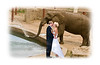Tracy and Chris were the lovely couple whose wedding I was privileged to photograph.  Because Tracy is the curator of animals at the zoo, she wanted to be photographed with the elephants, but did not want to mess up her dress in the muddy elephant enclosure.  So, I photographed the elephants separately and then inserted Chris and Tracy into the image via Photoshop.  I did a number of different versions with various elephants.  I think they turned out pretty well.  Hope your weekend is going great.  I'm relaxing a bit and also trying to come up with an entry for the next Dgrin challenge.