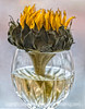 Dying sunflower and baccarat crystal - taken some time ago.  I always planned on using it as my daily but forgot about it until I stumbled across it today.<br /> <br /> You all were too nice about my shot of the condensation in the water bottle.   I did have a good time photographing it, though.  Like most of us, I seem to be obsessed with little drops of water in any form.  Have a great day today...try to have some fun!