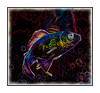 Psychedelic Fish - shot a while ago.  I always intended to use it as a daily and then forgot about it.  Decided to resurrect it for today's daily.  Thanks for all the comments on my little girl and her mom at the Cherry Creek Art Festival.  I sure enjoyed all the great smug shots today.  There were some fabulous ones, as always.  So much talent here!