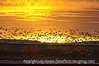 Part of the sunrise flyout of the snow geese at Bosque del Apache National Wildlife Refuge in NM.  Best viewed in the largest sizes.  Most of the shots from Bosque del Apache are SOOC.  As I was taking the photos, I was adjusting the exposure compensation and the shutter speed, depending on the amount of light available.  This shot was taken the same morning as the shot with the shades of pink in the sky and tons of birds flying.  Both were SOOC.  The differences were just a matter of a few minutes.<br /> <br /> Thanks for you comments on my shot of the spring flowering branch.  We did have a very springlike day today, so I know it will get here eventually.  <br /> <br /> Have a great day!