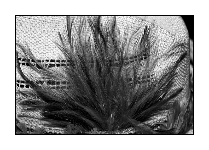 Feathers on a hat; best viewed in the larger sizes<br /> <br /> Thanks for the comments on my shot of the burrs.  Yes, you can really see how they would stick to you or your clothes.  I think we are going to drive up to Cripple Creek today.  Hope your day is all you hope for...