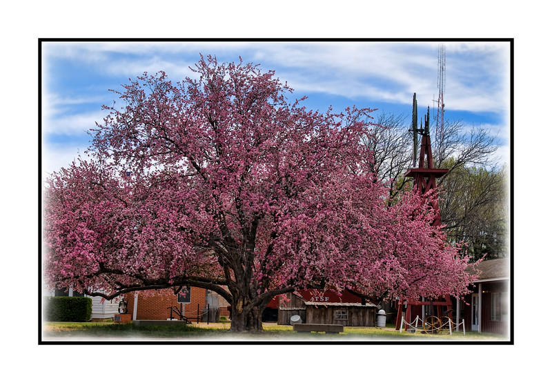 I'm not sure what type of blooming tree this is.  It is in a tiny Texas panhandle town.  At first, I thought it was a crabapple, but there are no leaves showing, so it must be something else.  It is a gorgeous old tree and was totally covered in blooms when I photographed it at the end of March.  Hope everyone had a good weekend and a nice Mother's Day!