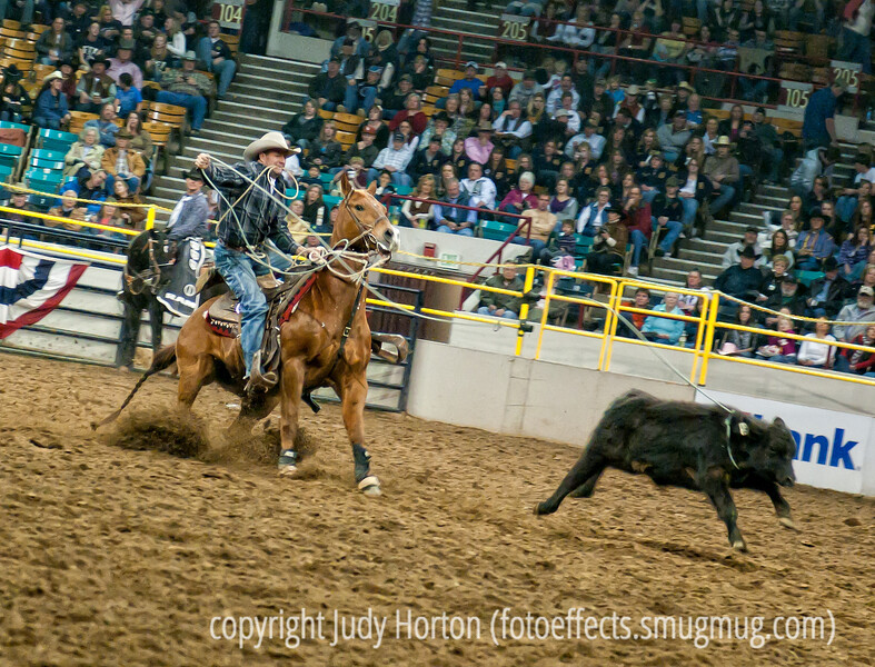 Calf roping event at the Western National Stock Show Pro Rodeo in Denver - Hallelujah!  We got to go to the rodeo and it was so much fun, although my knees are bruised from kneeling most of the time.  I really had no idea what settings would be best for capturing these rodeo action shots.  Most of the time I used a shutter speed of 1/250 sec., with ISO 200, and exposure compensation cranked up to +5.  As a result of the slower speed, the focus is not as sharp as I'd like.  I've only looked at a few of the pictures, so far, so I've no good idea of what I've gotten.  I processed just nine shots and decided to post this one.  I have even more respect for great photographers like Gene and Andrea, who consistently give us such wonderful shots.  <br /> <br /> Thanks for all the positive comments on my shot of the horse from the zoo.  It was processed. Hope your week is doing well.