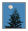 The moon rises over the Everglades and a mockingbird perched at the top of a Norfolk Island Pine tree.  Lots of great images today from young, older and in-between.  So much talent leaves me awed!  Have a great Sunday!