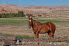 8/27/12 - Horse with Wyoming's Badlands or Painted Hills in the background.  Best viewed in the largest sizes.  This was right outside the RV park where we spent a month...just outside Dubois, Wyoming.  I wasn't too pleased with the way the fence cuts across the horse's leg just above its feet, but I do like the way the color of the horse and the color of the hills is about the same color.  Mostly, for this one, I just wanted you all to see how pretty the Dubois area is.<br /> <br /> Thanks for all the comments on the shot of the hood ornament.  Much appreciated.<br /> <br /> Constructive criticism is always welcome.