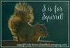 S is for Squirrel!