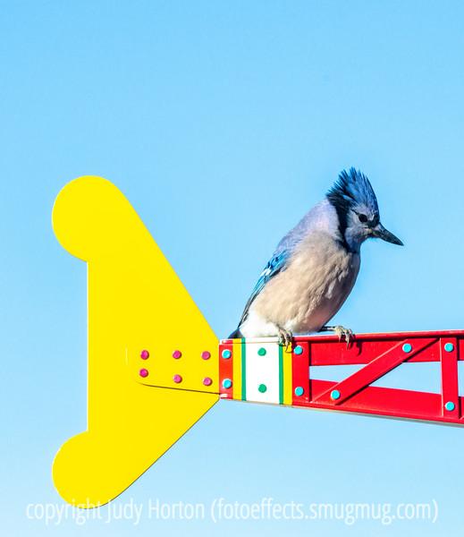 Blue Jay on the Eaton Weathervane