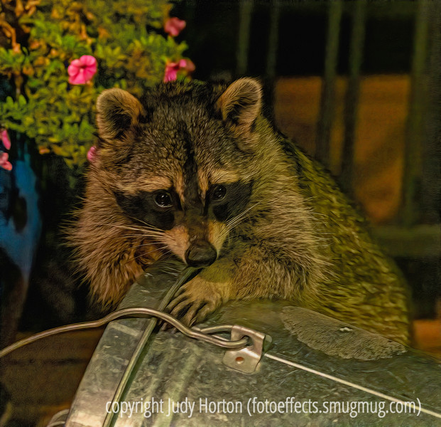 Raccoon on the deck, trying to get into our birdseed - about 2:00 a.m.
