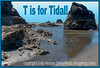 """T is for Tidal! I actually have 27 """"T"""" entries today, but I don't want the """"Most Popular"""" to be completely flooded with my images all at once, so I am going to upload them in batches at various times of the day.  Happy """"T"""" challenge, everyone!"""