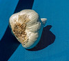 Garlic - a shot from a couple of years ago that, somehow, never got uploaded