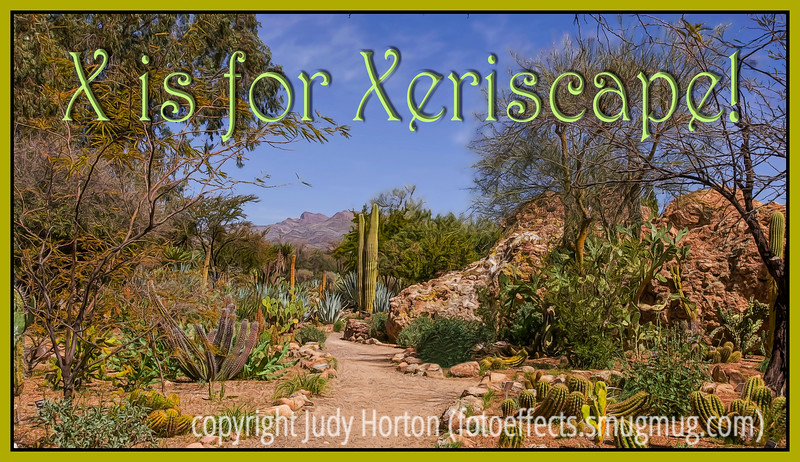 X is for Xeriscape!