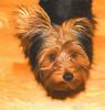 Winston, 5 1/2 months