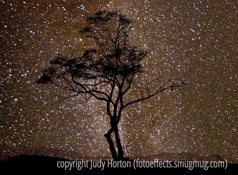 Milky Way Over Carpinteria Beach, California - this shot is actually a composite of two images, one of the tree taken at sunset and one of the Milky Way over Joshua Tree National Park