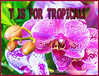 T is for Tropical!