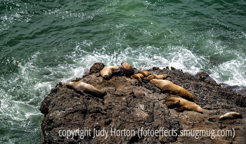 Seals on the Oregon coast<br /> <br /> Thanks to everyone who commented on my shot of the horses, as well as those who commented on some of my other images.