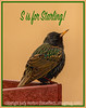 S is for Starling!