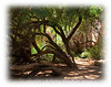 A shady spot in the Arizona desert, created by the desert willow